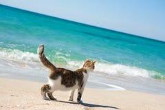 Kat op het strand Stock Fotografie