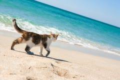Kat op het strand Stock Foto's