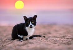 Kat op het strand stock afbeelding