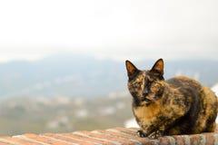 Kat op het terras royalty-vrije stock fotografie