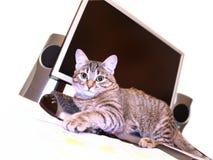 Kat op het toetsenbord Royalty-vrije Stock Fotografie