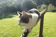 Kat op het traliewerk stock foto