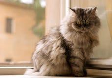 Kat op het venster Stock Afbeeldingen