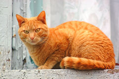 Kat op het venster stock afbeelding