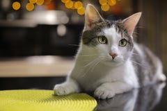 Kat op het zwarte bureau in de keuken Royalty-vrije Stock Afbeeldingen