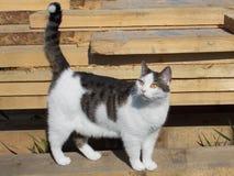 Kat op houten raad stock afbeelding