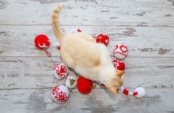 Kat op Kerstmis GLB en ballen Stock Afbeeldingen