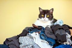 Kat op kleren Stock Fotografie