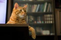 Kat op Lijst Royalty-vrije Stock Afbeeldingen
