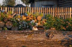 Kat op Logboeken Stock Foto's