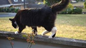 Kat op omheining stock video