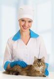 Kat op onderzoek door een dierenarts Stock Foto