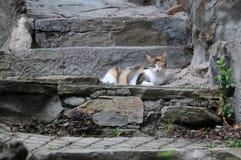 Kat op Oude Stappen Stock Foto
