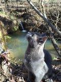 Kat op Prowl Royalty-vrije Stock Afbeeldingen