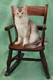 Kat op schommelstoel Stock Afbeeldingen