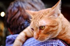 Kat op schouder stock afbeeldingen
