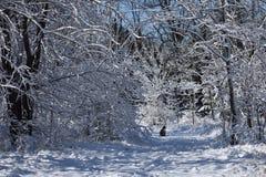 Kat op sneeuwsleep stock foto
