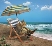 Kat op strand 3 Stock Fotografie