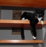 Kat op Treden Royalty-vrije Stock Afbeelding