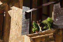Kat op venster Royalty-vrije Stock Foto's