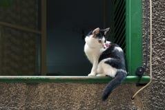 Kat op venstervensterbank Royalty-vrije Stock Foto