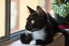 Kat op venstervensterbank die uit venster kijken Stock Afbeeldingen