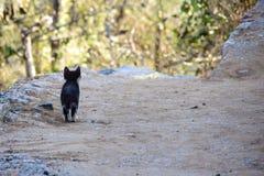 Kat op weg royalty-vrije stock afbeelding
