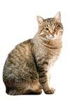 Kat op wit Royalty-vrije Stock Afbeelding