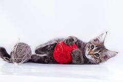Kat op wit, katje, leuke, pluizige bal Stock Afbeelding
