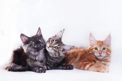 Kat op wit, katje, leuke, pluizige bal Royalty-vrije Stock Foto
