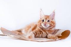 Kat op wit, katje, leuke, pluizige bal Royalty-vrije Stock Afbeeldingen