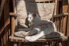 Kat op z'n gemak als voorzitter Stock Afbeelding