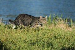 Kat op zoek naar voedsel Stock Fotografie