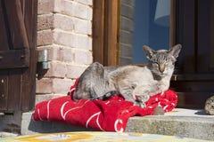 Kat openlucht in zon Stock Afbeeldingen