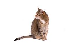 Kat over wit Royalty-vrije Stock Afbeeldingen