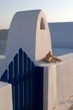 Kat over Witte Muur van Santori Stock Foto's