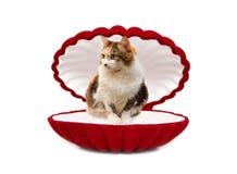 Kat in rode doos Royalty-vrije Stock Afbeelding