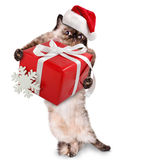 Kat in rode Kerstmishoeden met gift stock afbeelding