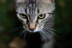 Kat in schaduw stock foto's
