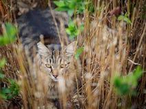 Kat in scrup stock afbeeldingen