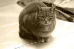 Kat in sepia royalty-vrije stock fotografie