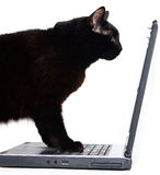 Kat is siting in front of a laptop. Black Cat and laptop isolated on white Royalty Free Stock Images