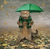 Kat in sjaal met paraplu royalty-vrije illustratie