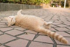 Kat in stad Royalty-vrije Stock Fotografie