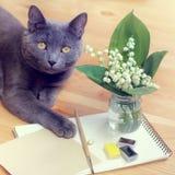 Kat in stilleven royalty-vrije stock afbeelding