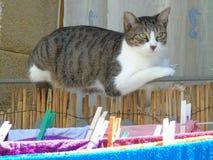 Kat terwijl het rusten op het balkontraliewerk Royalty-vrije Stock Afbeeldingen
