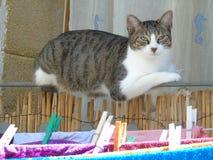 Kat terwijl het rusten op het balkontraliewerk Royalty-vrije Stock Foto