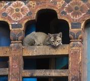 Kat in traditioneel huis Thimpu Koninkrijk van Bhutan royalty-vrije stock afbeeldingen
