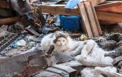 Kat in troepwerf Stock Foto