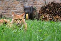 Kat in tuin Royalty-vrije Stock Foto